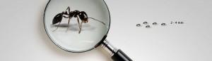 la fourmis noire